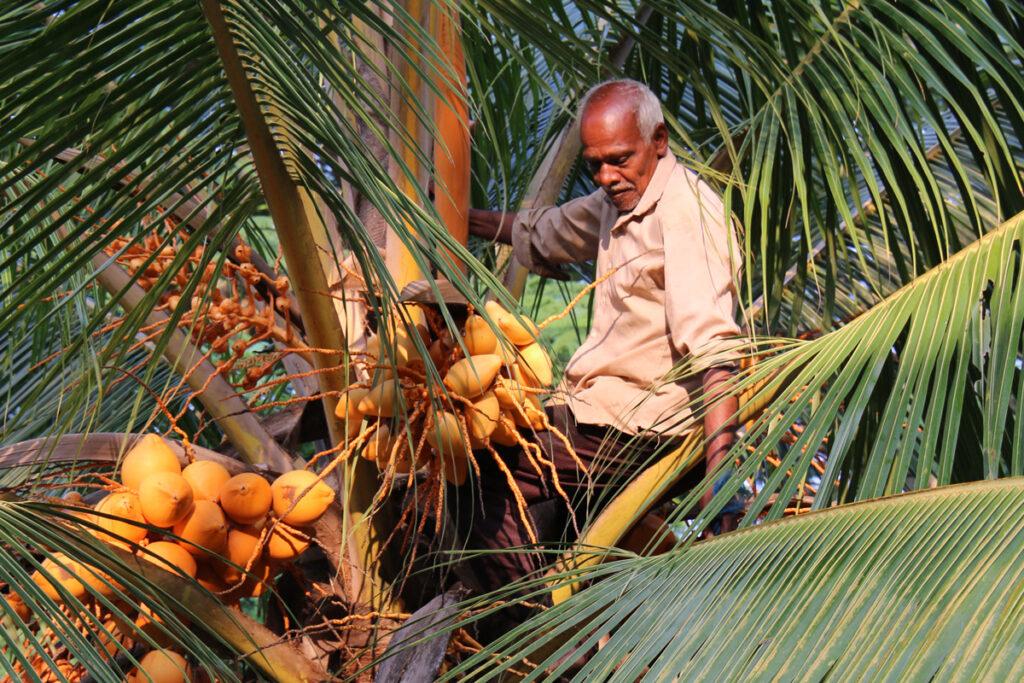 man op een palmboom